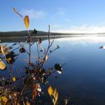 Kraftig ökning av död havsbotten i Östersjön